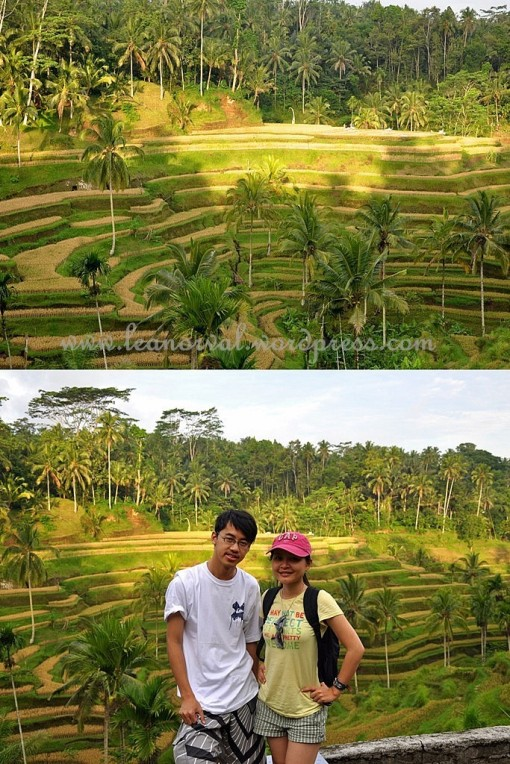 Top: the awesome paddy field    Bottom: hmm... so not match, next!! but my fav bb-t matched the background perfectly though!!