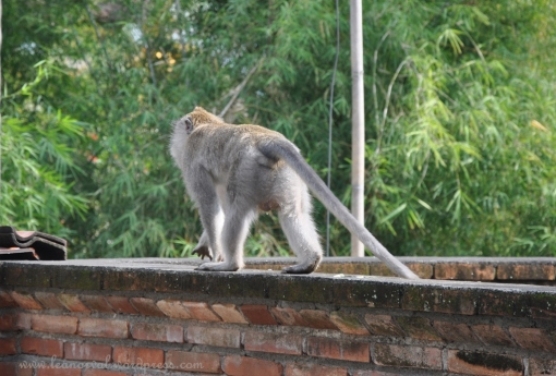 freaking monkeys loitering around our hotel roof tops.... and CMee blamed them for her bad night sleep.