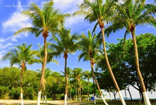 palawan beach, sg